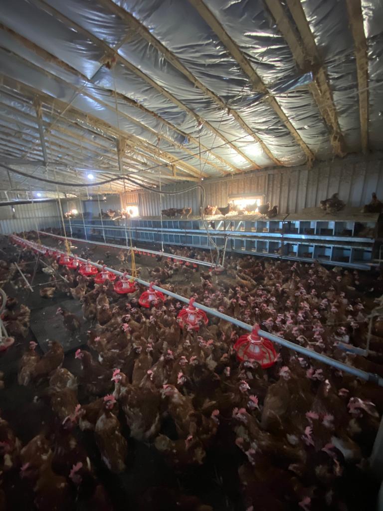 cf348147 8795 4d7a 8415 03cc1a468096 1 - Edirne de Satılık Sahibinden Tavuk Çiftliği
